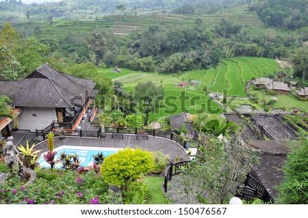 Green rice fields on Bali island - stock photo