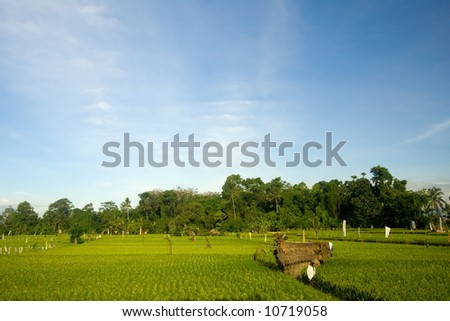 Green rice paddy field in Bali, Indonesia - stock photo