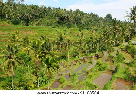 Green rice terraces in Bali - stock photo