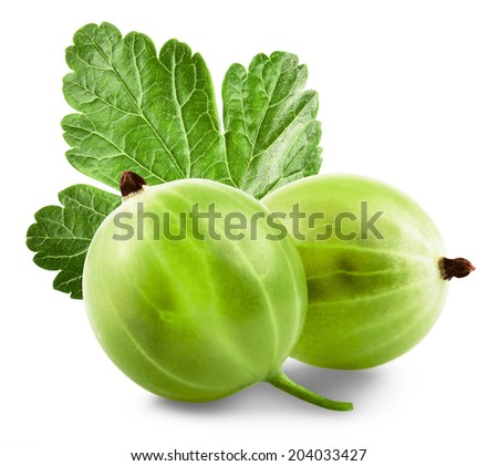Green Ripe Gooseberries isolated on a white background - stock photo
