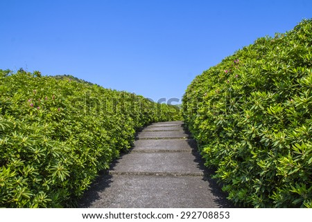 Green road up with simple blue background. - stock photo