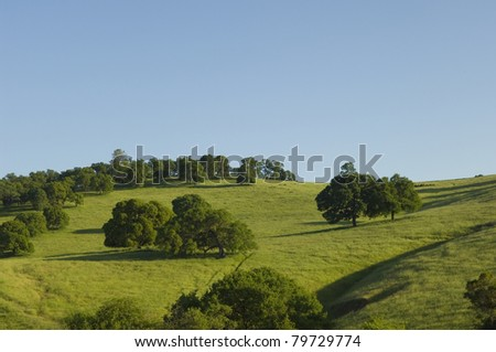 Green rolling hills in spring of Northern California - stock photo