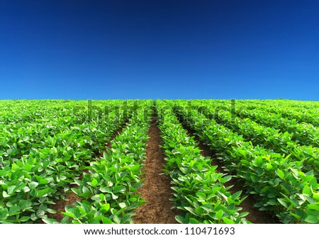 Green rows and blue sky. Natural composition - stock photo