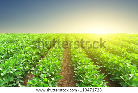 Green rows and sun glow. Natural composition - stock photo