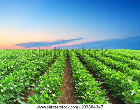 Green rows on field and bright sky. Agricultural composition - stock photo