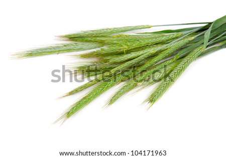 Green rye spikes (Secale cereale), on white background - stock photo
