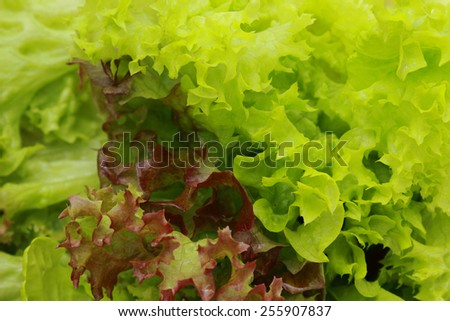 green salad background - stock photo