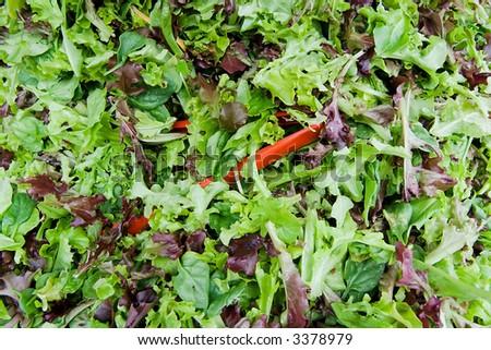 Green Salad Background - stock photo
