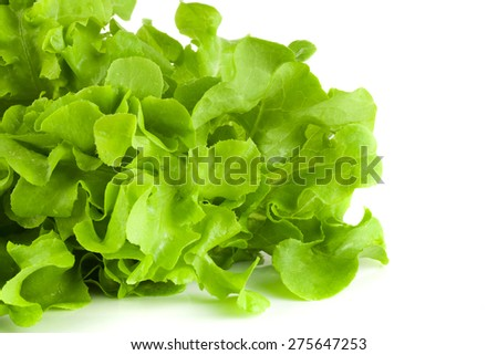 green salad isolated on a white background - stock photo
