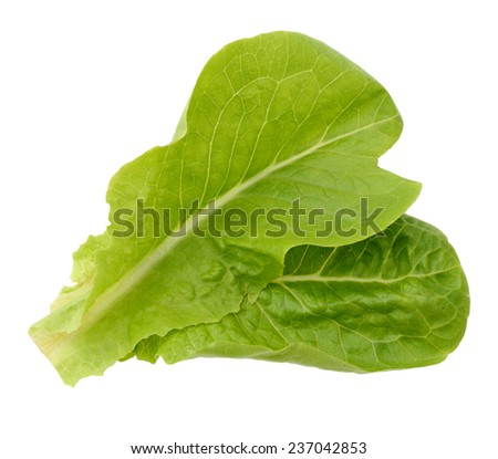 Green salad leaf isolated  - stock photo