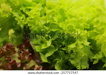 Green salad texture - stock photo