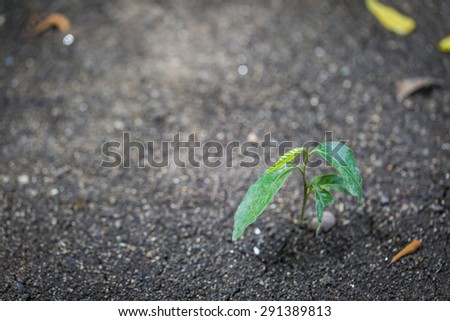 Green Sapling trees grow from the ground nature background - stock photo