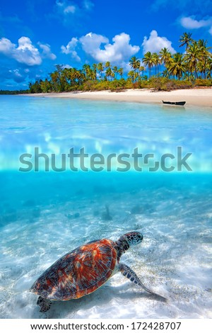 Green sea turtle and tropical beach above and below water - stock photo
