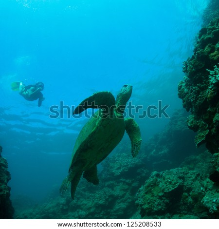 Green sea turtle swimming gracefully through the ocean - stock photo