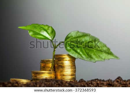 Green seedling growing from coins in the soil. The concept of money growth. - stock photo