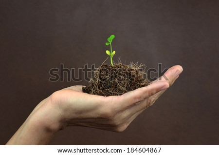 Green seedling growing from soil in hand - stock photo