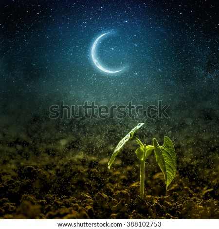 Green seedling growing on the moon and stars. Elements of this image furnished by NASA - stock photo