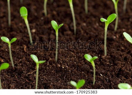 Green seedling growing out of soil - stock photo