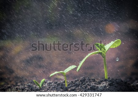 Green seedlings growing for business concepts - stock photo