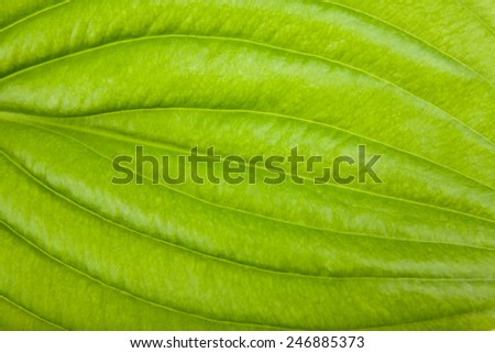 green sheet as background - stock photo