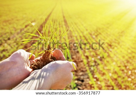 Green shots in the hands against field - stock photo