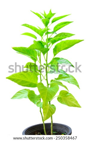 green small plant isolated - stock photo