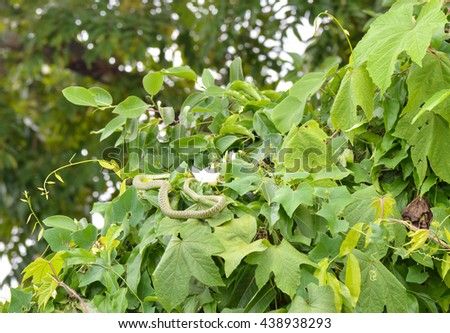 Green snake  in nature. - stock photo
