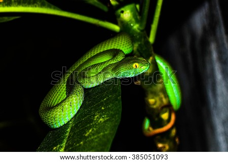 Green snake was sleeping near the wall, Thailand. - stock photo