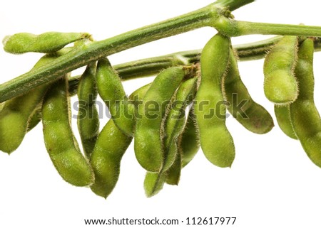 green soy bean on white background - stock photo