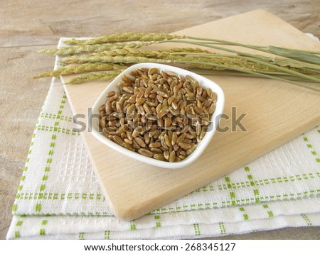 Green spelt and spelt ears - stock photo