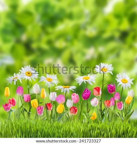 Green spring background with flowers - stock photo