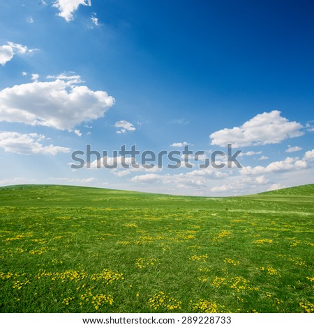 Green spring field with yellow flowers against  blue sky and some fluffy clouds/green spring field/ green field  - stock photo