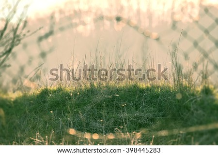 Green spring grass illuminated by the sun. Interesting shot behind the grid. Nature background for design - stock photo