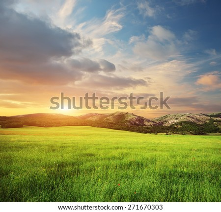 Green spring meadow in mountain. Composition of nature. - stock photo
