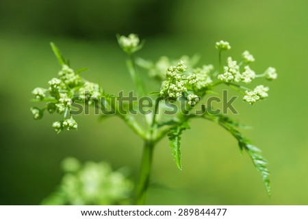 Green spring plant - stock photo