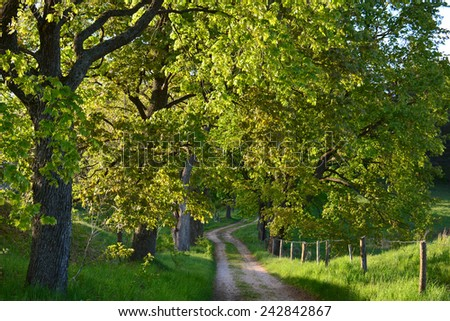 green spring road with old trees - stock photo