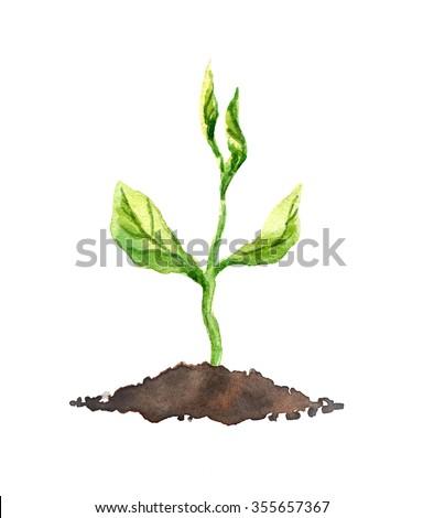Green spring sapling. Ecologic concept. Watercolor - stock photo