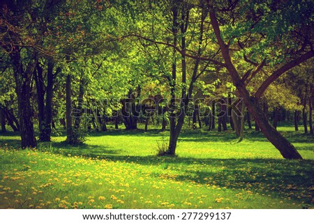 Green spring summer park. Blooming grass, trees, dandelions. - stock photo