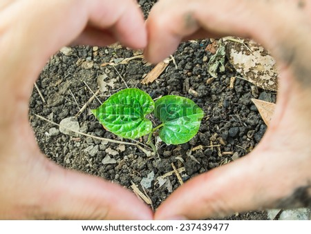 Green sprout germinates from ground cover with dried leaves in nature, new or start or beginning concept - stock photo