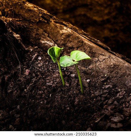 Green sprout growing from dead log - stock photo