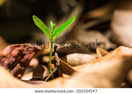 Green sprout growing from ground cover with dried leaves in nature, new or start or beginning concept - stock photo