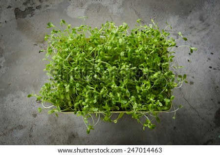 Green sprout growing from seed - stock photo