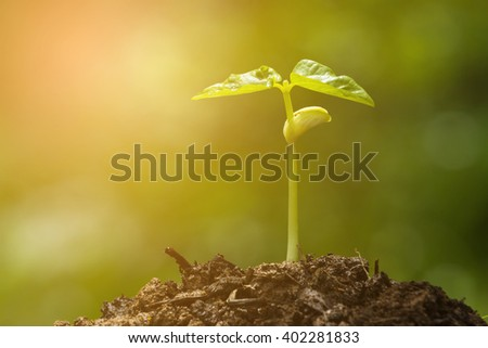 Green sprout growing from seed and color tone effect - stock photo