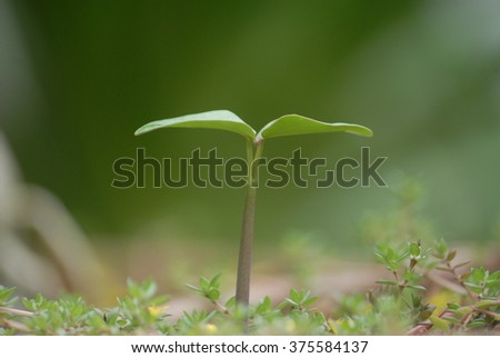 Green sprout growing from seed in the forest  - stock photo