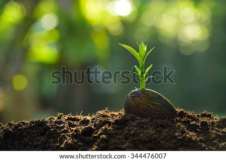 Green sprout growing from seed on nature background - stock photo