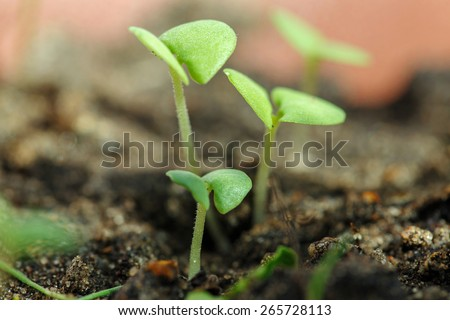 Green sprout growing from seed. Spring symbol, concept of new life - stock photo