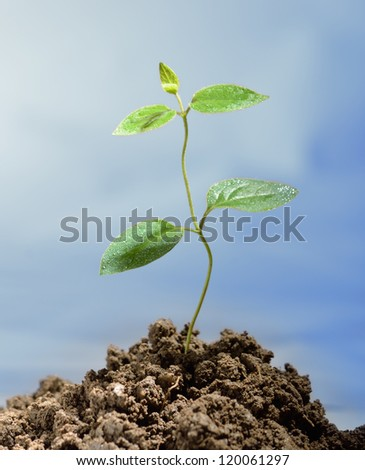 Green sprout growing from soil - stock photo