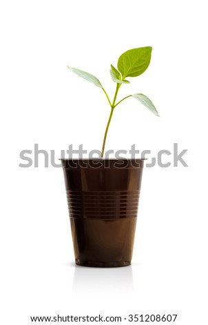 Green sprout in a brown plastic cup. Small green plant. Isolated on white background. - stock photo