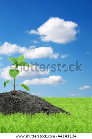 Green sprout isolated  on a white background - stock photo