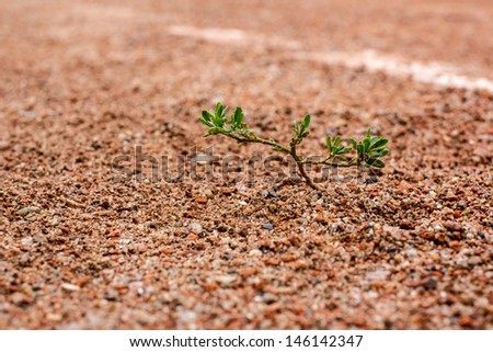 Green sprout on an old tennis court - stock photo
